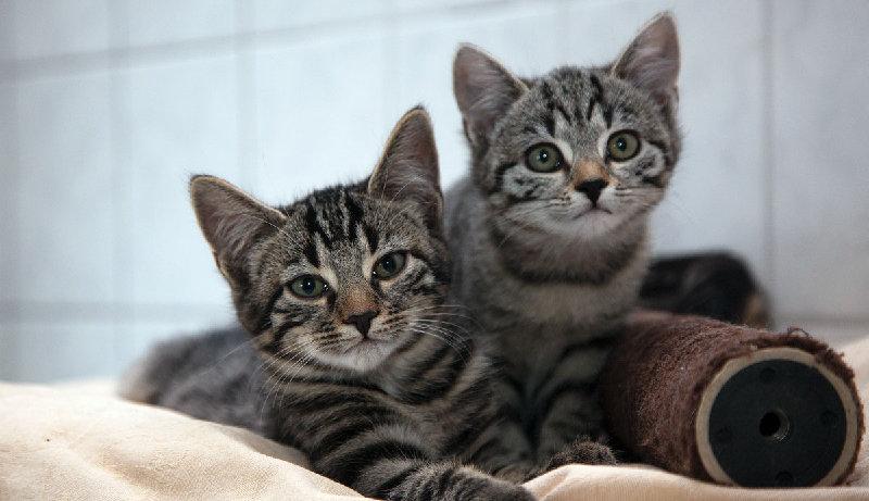 Kitten und Jungkatzen, EKH, 2015