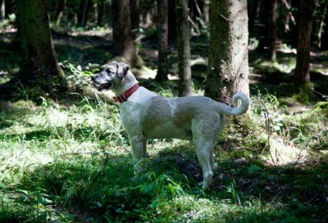 Herdenschutzhund – Der will nicht nur spielen  –