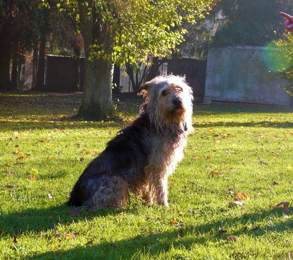 Ronnie, Mischling, 2004