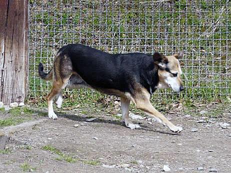 Sima, Mischling, 2007