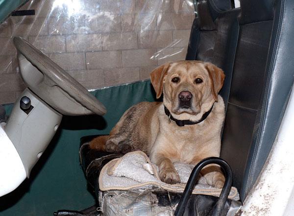 Oscar, Labrador, 2005