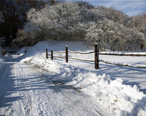2012 Winter im Tierheim