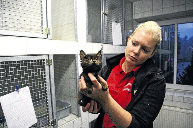 39 verwahrloste Katzen aus Messie-Haushalt sind gesichert
