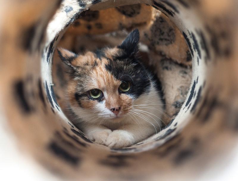 Daisy, EKH, 2011