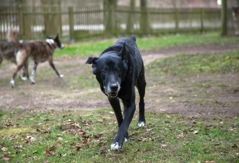 Mischlingshund ausgesetzt – Strafanzeige erstattet
