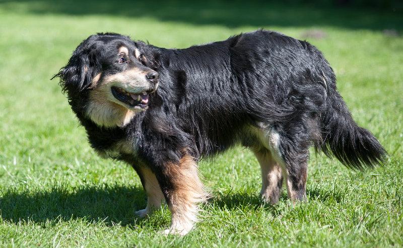 Bruno, Fundhund