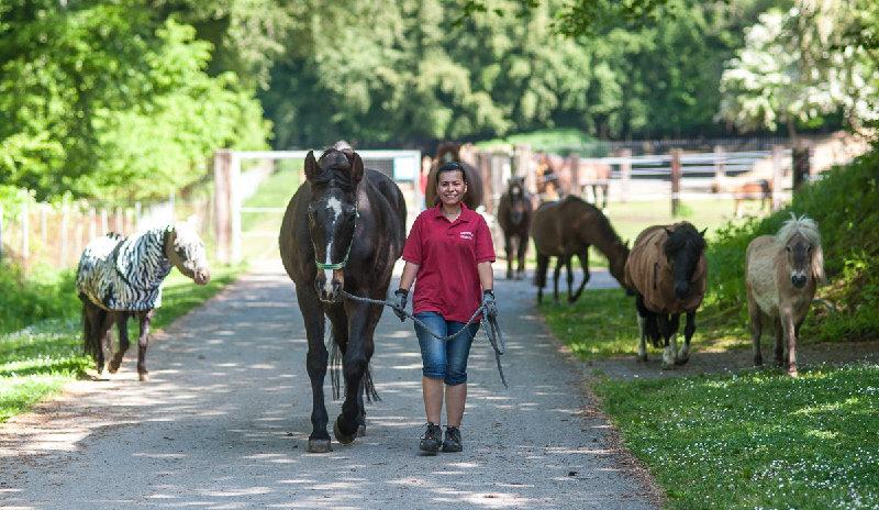 Pferdesommer im Tierheim