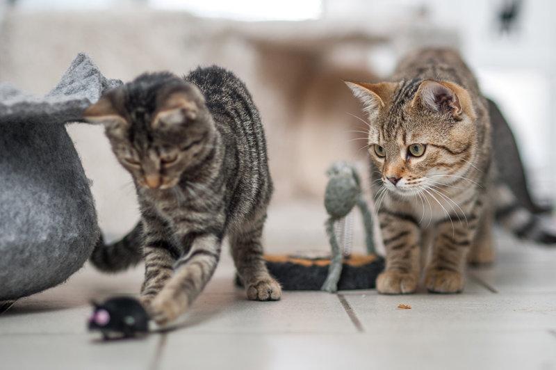 Kitten und Jungkatzen, EKH, 2016