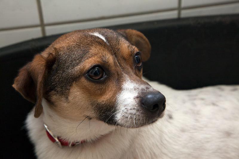 Doby, Terrier Mischling, 2014