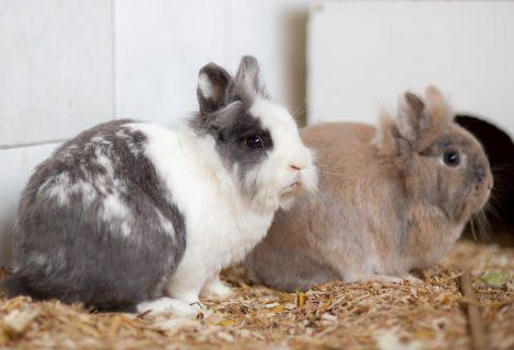 Hasen und Kanninchen