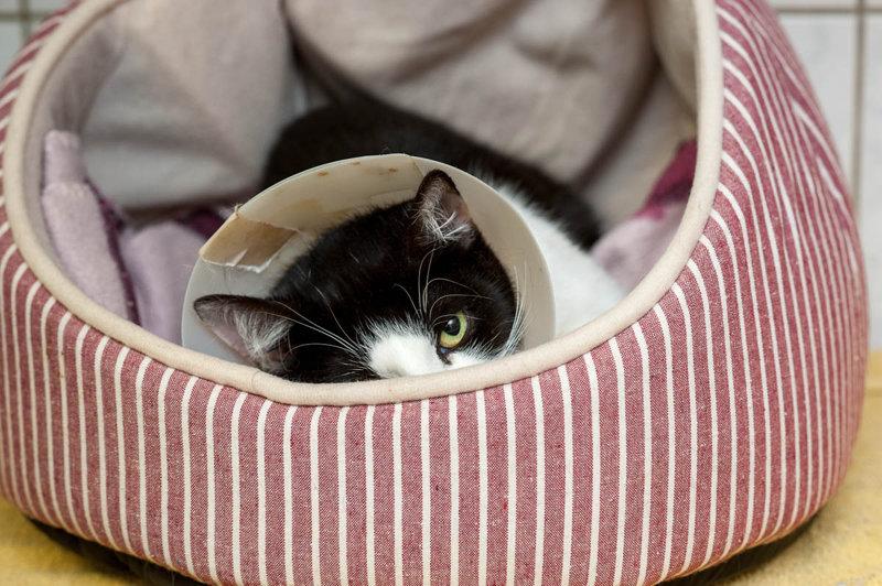 """Das """"Katzenelend"""" nimmt kein Ende"""