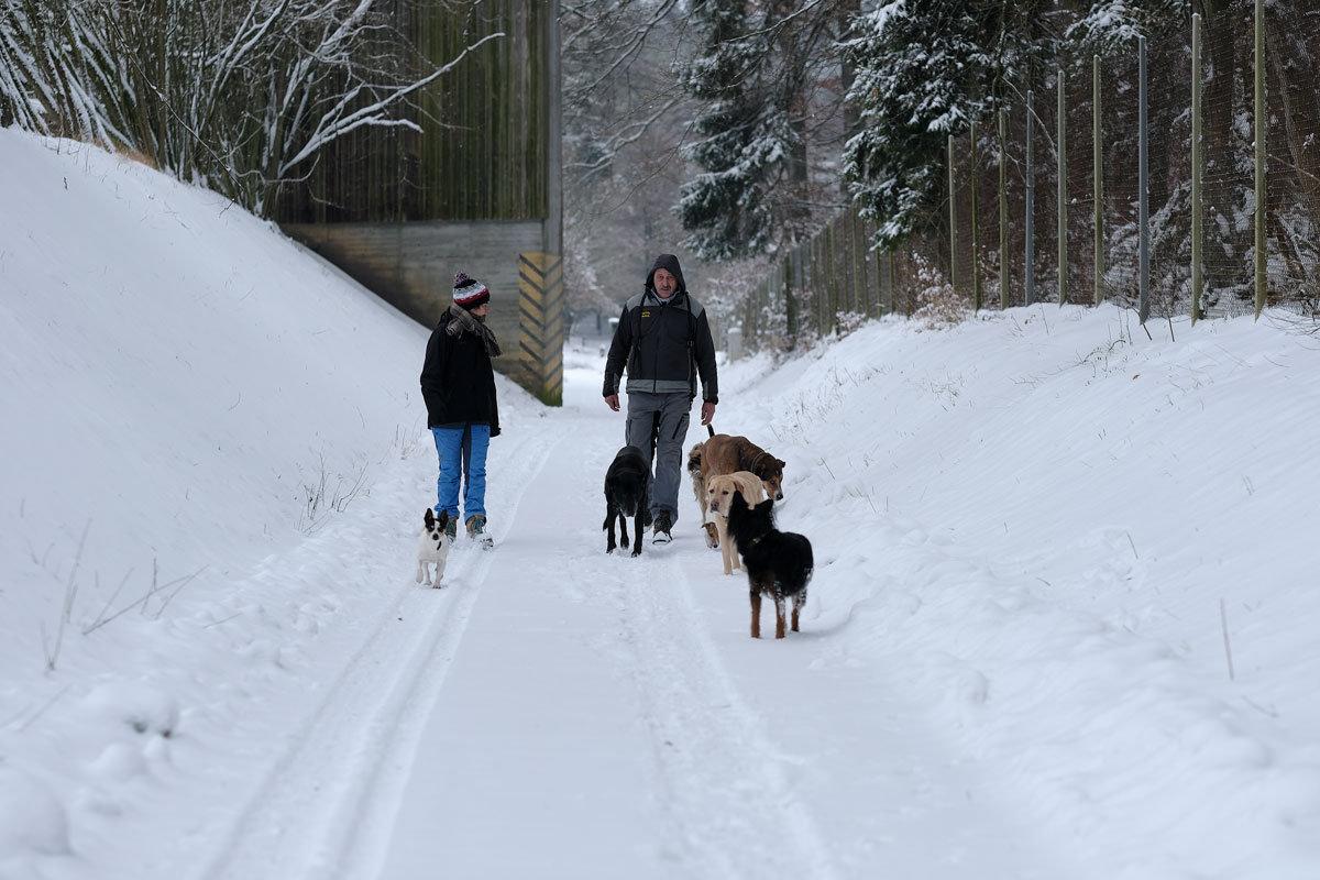 Winterimpressionen in Bildern