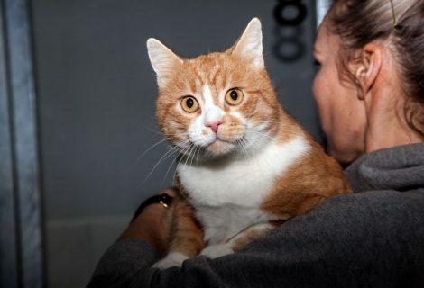 Garfield, EKH, 2012