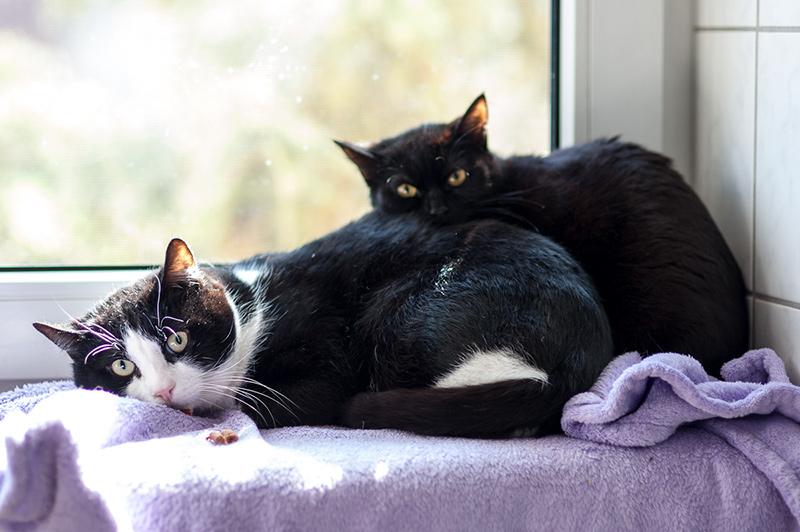 Fridolin und Mabel, EKH, 2008/2015