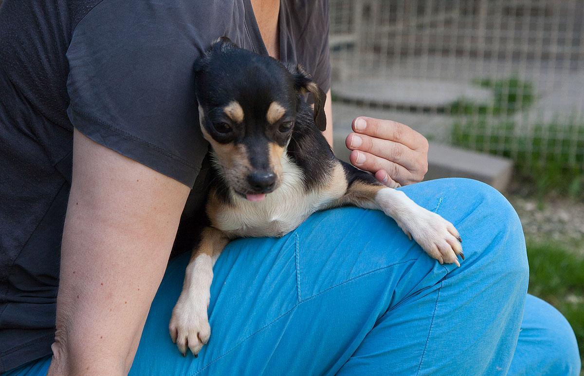 Anton,  Chihuahua, 2014