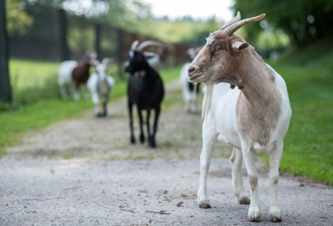 Pferde- und Ziegenleben im Tierheim