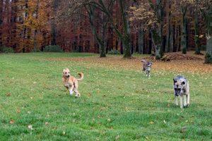 Rettung von ca. 100 Hunden in Königsmoos