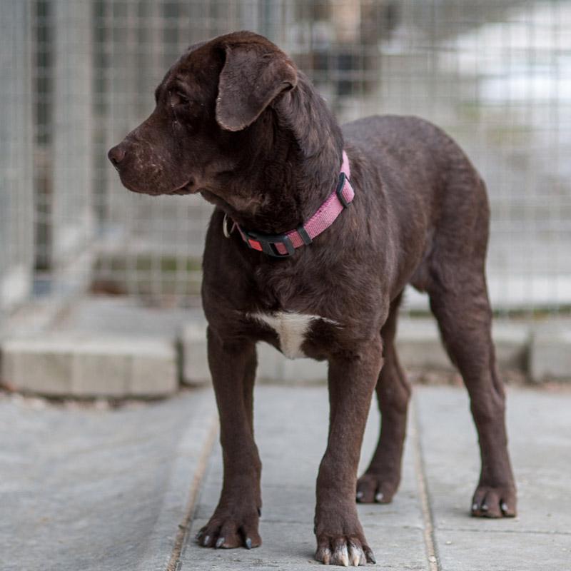 Rudi, Labrador, unbekannt