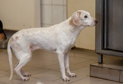 Ella, Labrador, unbekannt