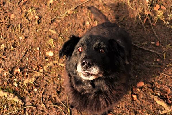 Rex, Spitzmix, 2006